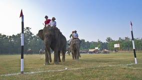 大象马球特写镜头在尼泊尔 库存照片