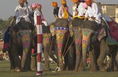 大象马球 免版税库存照片