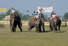 大象马球 库存照片
