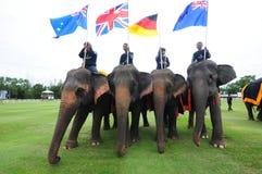 大象马球 免版税库存图片