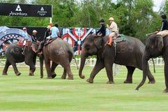 大象马球 库存图片