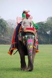 大象骑马在印度 免版税图库摄影