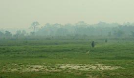大象骑马 库存照片