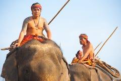 大象高骑马培训人 图库摄影