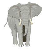 大象,例证 免版税库存照片