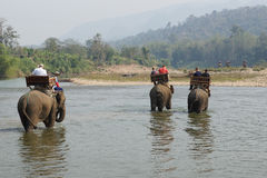 大象,老挝,亚洲 免版税库存图片