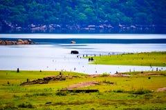 大象浴在湖 库存图片