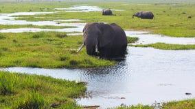大象-徒步旅行队肯尼亚 免版税库存图片