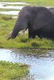 大象-徒步旅行队肯尼亚 库存照片