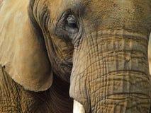 大象-接近  库存照片