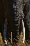大象画象 库存图片