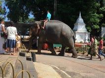 大象 库存照片