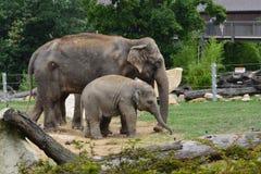 大象 免版税图库摄影