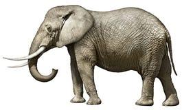 大象 免版税库存图片