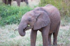 大象崽 库存照片