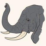 大象头 库存例证