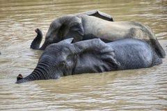 大象 库存图片