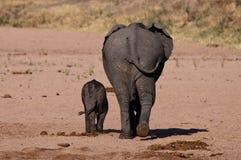 大象behinds 免版税库存图片