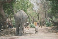 大象Buttom在大象村庄 免版税库存图片