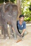 大象gandah瓜拉孤儿院圣所 库存照片