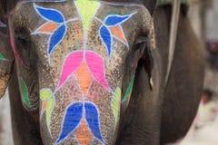 大象Holi节日在斋浦尔,印度 库存图片