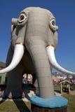 大象lucy 免版税图库摄影