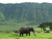 大象ngorongoro坦桑尼亚 免版税库存照片