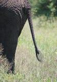 大象s尾标 免版税图库摄影