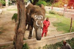 大象SUZI和教练员在拉合尔动物园里 免版税库存照片