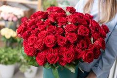 大豪华明亮的花束在一个逗人喜爱的女孩的手上 一百庭院英国兰开斯特家族族徽 热情地上色猩红色 免版税图库摄影