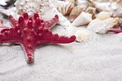 大贝壳和红海在沙子担任主角 背景球海滩美好的空的夏天排球 免版税图库摄影