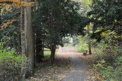 大路在秋天 免版税库存照片