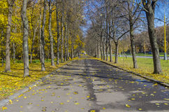 大路在10月。 免版税库存照片