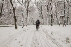 大道曲线路多雪的结构树冬天 免版税库存照片