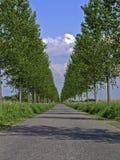 大道被排行的结构树 免版税库存图片