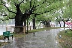 大道雨春天 库存图片
