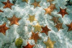 大量在含沙海底上的海星 免版税图库摄影