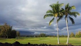 大量在棕榈下的高尔夫球在Waikoloa附近的一家高尔夫俱乐部 库存图片