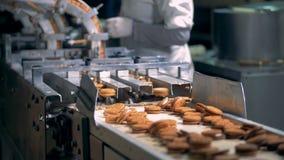 大量完成的饼干沿传送带移动在被发布被机制以后 影视素材