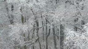大量降雪 积雪的森林在冬天 飞行雪花 股票录像