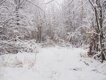 大量降雪 免版税库存图片