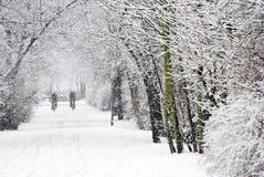 大量降雪 库存图片