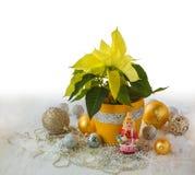 大量黄色一品红和圣诞节装饰产品  图库摄影