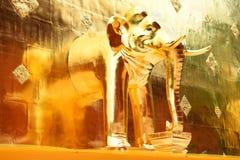 大金黄塔,与大象的Chedi在Wat Phra辛哈, 图库摄影