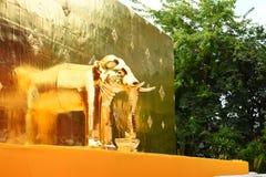 大金黄塔,与大象的Chedi在Wat Phra辛哈 免版税库存照片