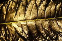大铜叶子 免版税库存图片