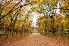 大阪公园秋天 免版税图库摄影