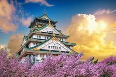 大阪在日落的城堡和樱花在春天 佐仓季节在大阪,日本 库存图片