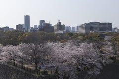 大阪看法从城堡的在樱花期间在一好日子 库存图片