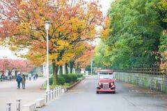 大阪,日本- 2017年11月20日:叶子在秋天上的颜色变化 库存照片